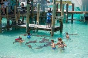 Swim with the Nurse Sharks off Compass Cay