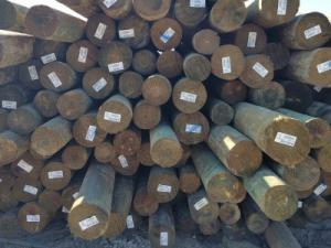 Treated Wood Piling