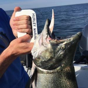 Fish Gill Gaff - Fish Hurley Marine